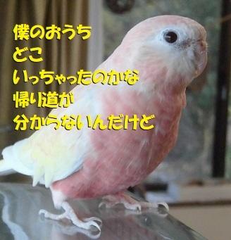 CIMG4013.jpg