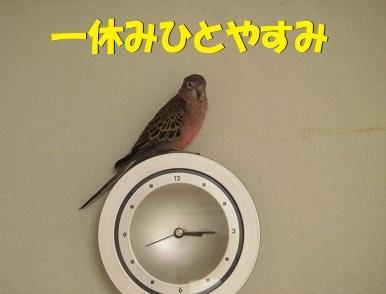 cocohasabreak.jpg