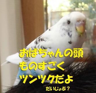 haruchikuchiku.jpg