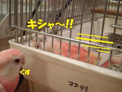 nanastep3.jpg