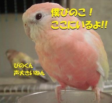 pinoyakamashi.jpg