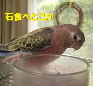 tsubiplus.jpg