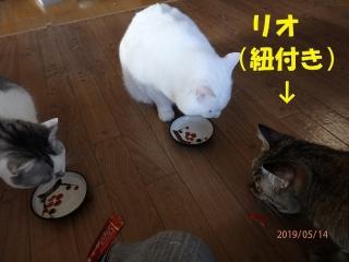 blog190520_2.jpg