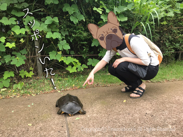201907Kansui_park_Toyama-6.jpg