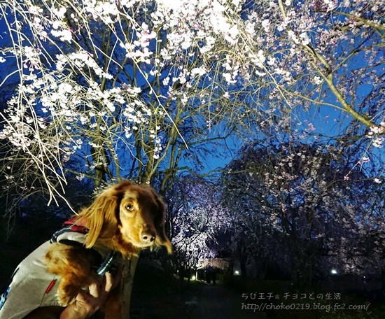 19-04-12-18-31-55-929_photo.jpg