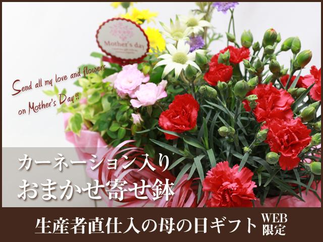 母の日 カーネーション 鉢 5月12日 プレゼント 宅配 赤 ガーデニング 人気
