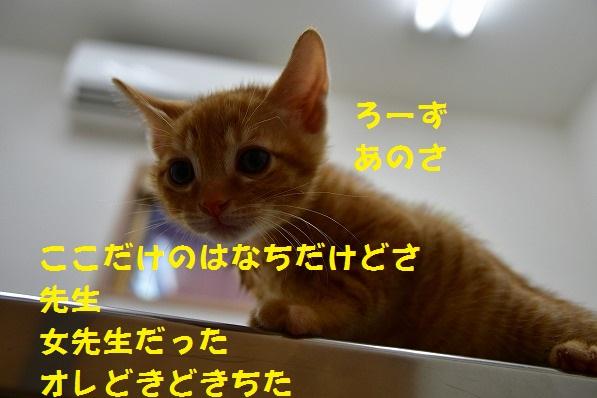 5_2019062002311304d.jpg