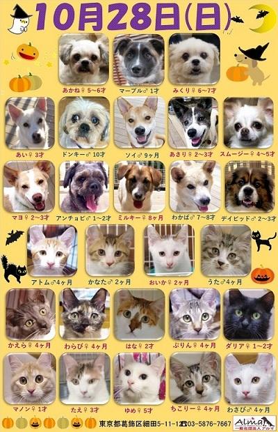 ALMA ティアハイム2018年10月28日 参加犬猫一覧
