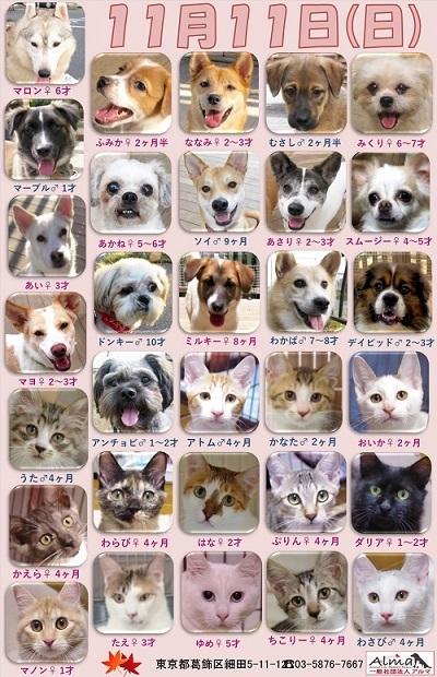 ALMA ティアハイム2018年11月11日 参加犬猫一覧