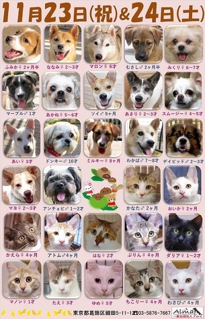 ALMA ティアハイム2018年11月2324日 参加犬猫一覧