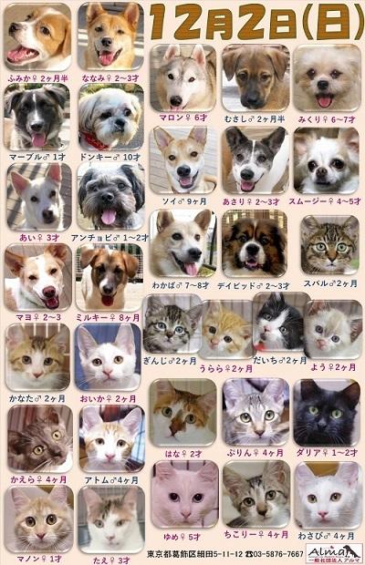 ALMA ティアハイム2018年12月2日 参加犬猫一覧