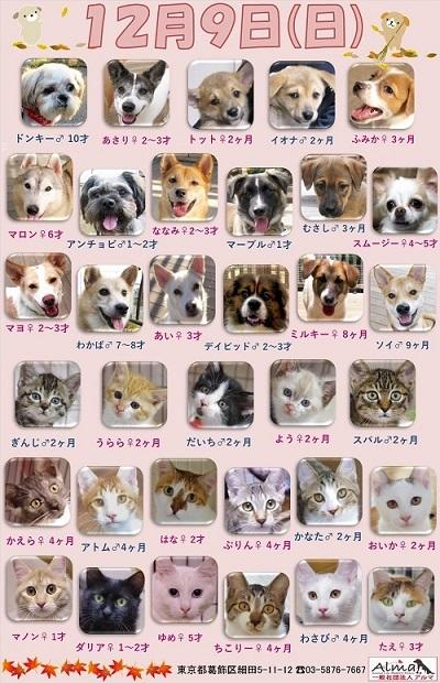 ALMA ティアハイム2018年12月9日 参加犬猫一覧