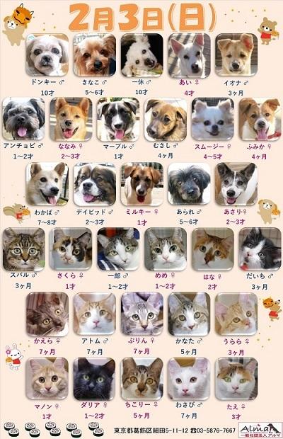 ALMA ティアハイム2019年2月3日 参加犬猫一覧 (修正)