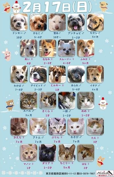 ALMA ティアハイム2019年2月17日 参加犬猫一覧