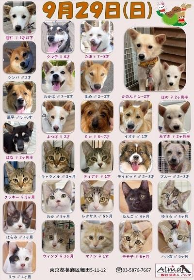 ALMA ティアハイム2019年9月29日 参加犬猫一覧