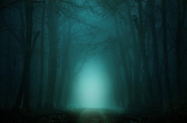 forest-4099730_640.jpg