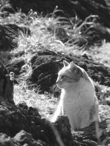 ★いがいが猫2 - コピー