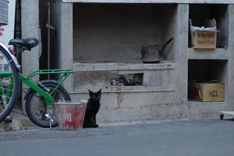 ★バケツ黒猫