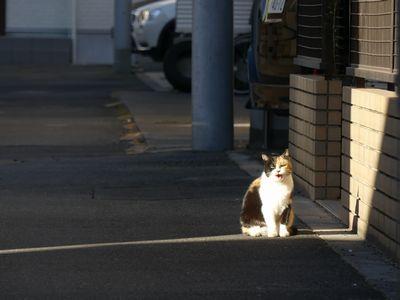 ☆高円寺のネコ
