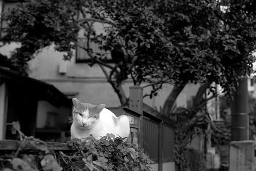 ウインク猫2