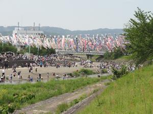 令和元年5月3日鯉のぼりblog0