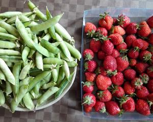えんどう豆いちごblog01