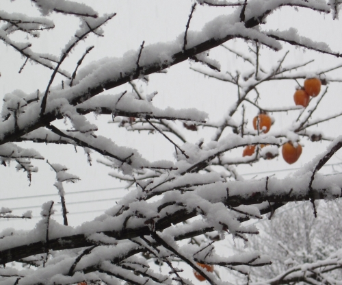 雪景色 柿