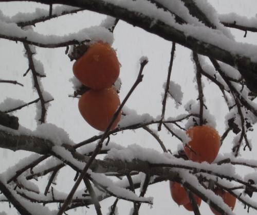 雪景色の中の柿