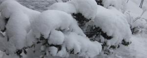 雪を被って