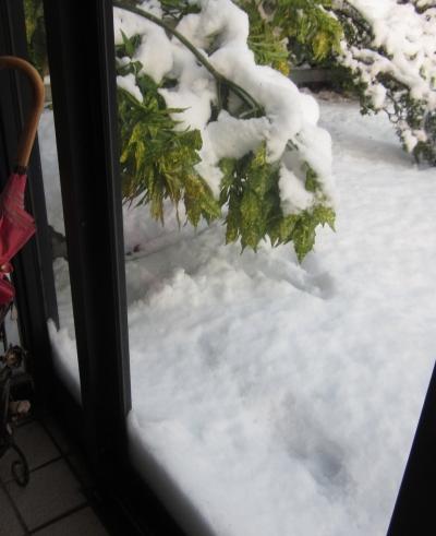平成31年3月12日 玄関 雪