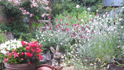 令和元年 6月小雨の庭