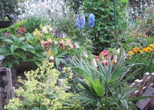 夕方の庭 小雨