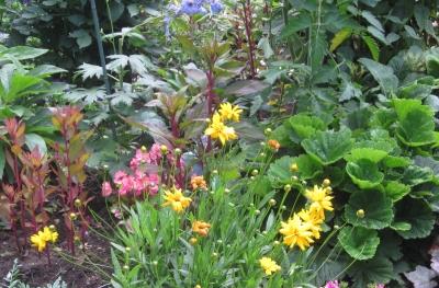 令和元年7月の庭