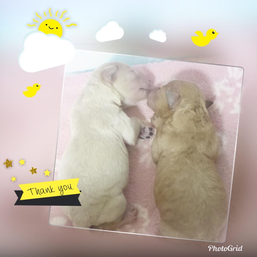 fc2blog_2019032102384195b.jpg