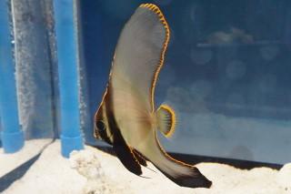 アカククリ幼(池袋)