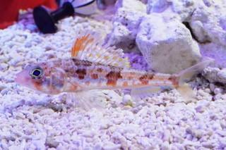 ヒメ(蝦蟹)