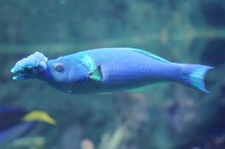クギベラ雄(池袋)