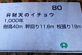 RIMG2253.jpg