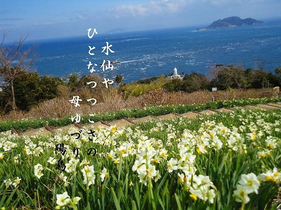 関崎岬の水仙