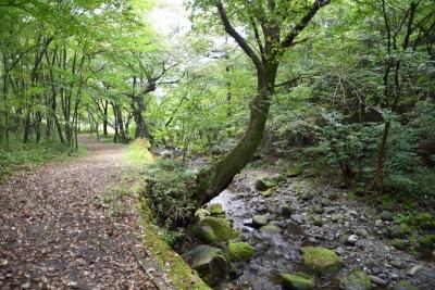 栃木県民の森 宮川渓谷