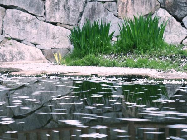 鹿の井06