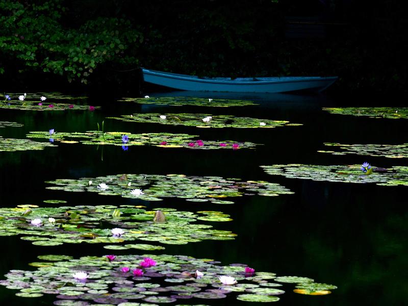 水の庭07