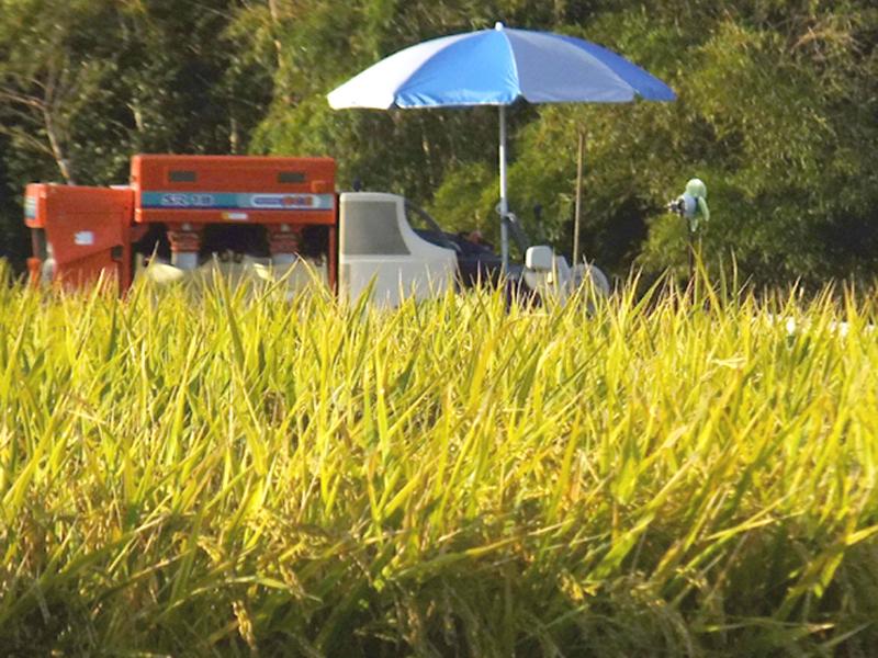 稲刈り03jpg
