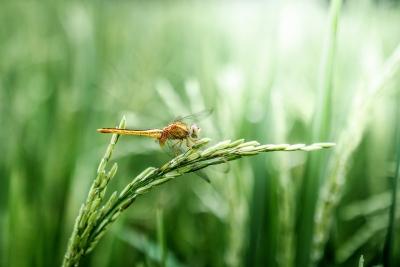 dragonfly-2551460_1920.jpg