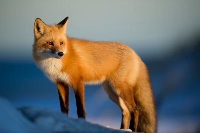 fox21th-20190226.jpg