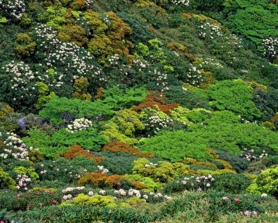 vegetation-2205254_1920.jpg