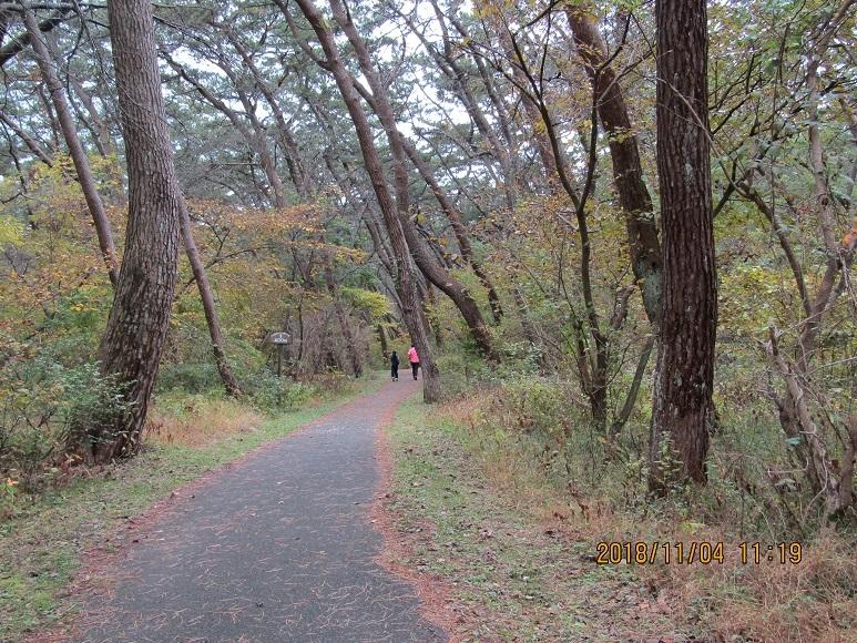 秋の松原1