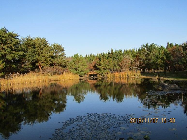 公園の湖面1