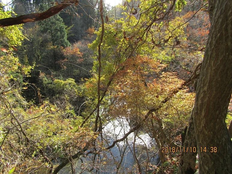 真瀬川の紅葉終盤1