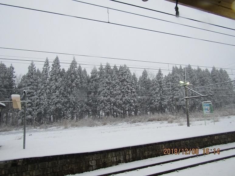 構内の松と雪